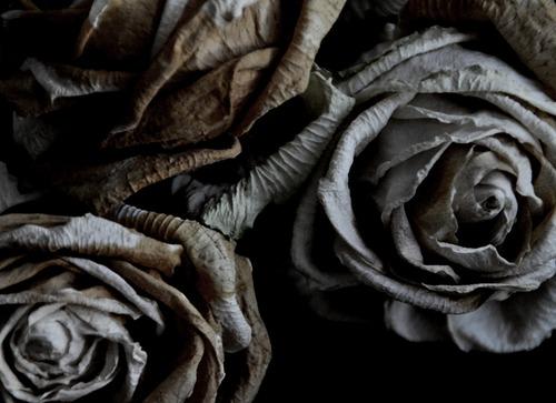 The Beauty of Gray | Image Source: Sabattoir